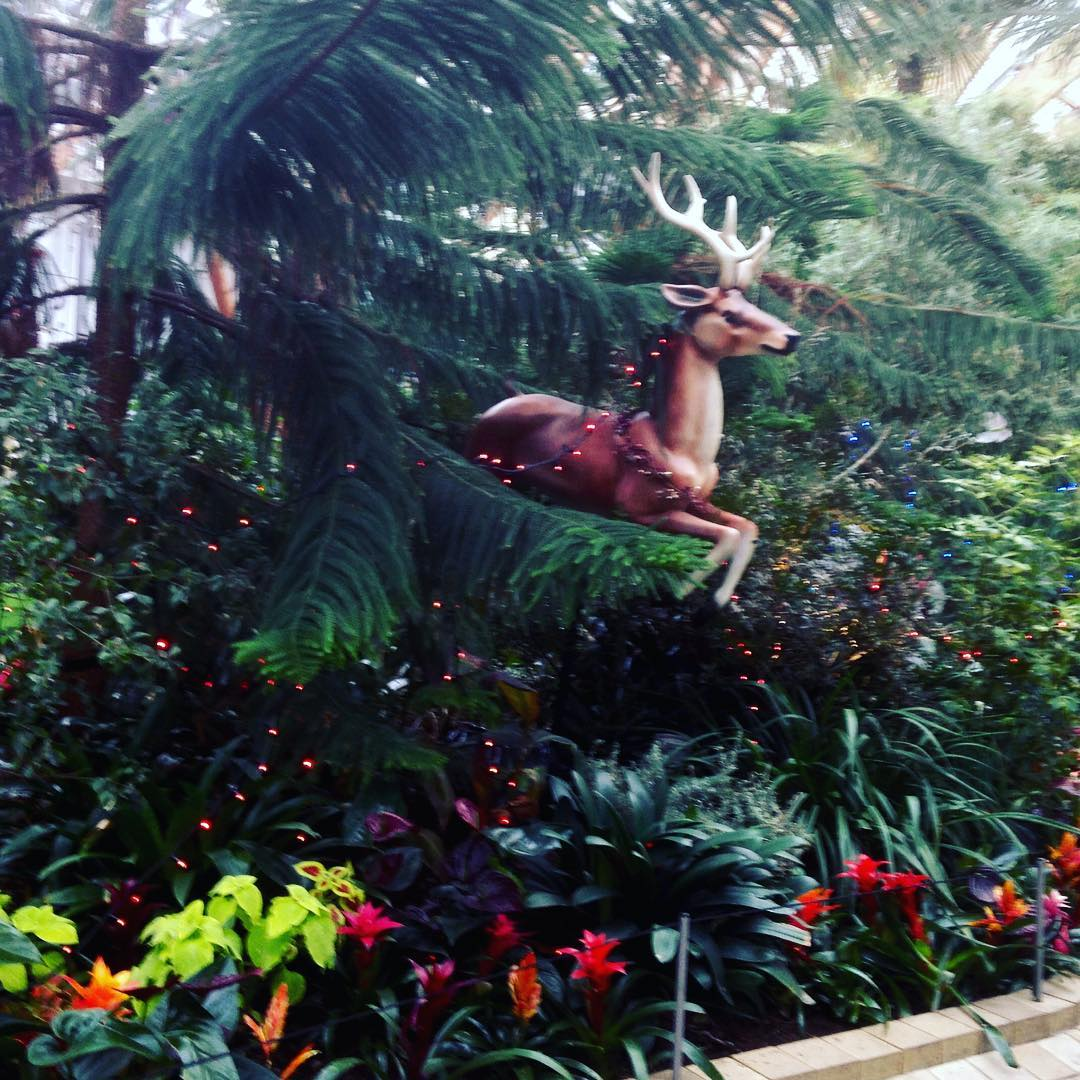 Its not Rudolphno red nose reindeer mychristmascountdown sheffieldwintergardens merryandbright soonbechristmashellip